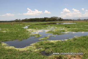 Kenia Nationalpark Nakuru