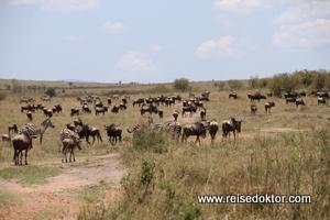 Tierwanderung in der Masai Mara