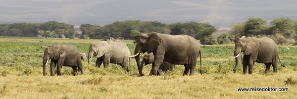 Elefantenherde im Amboseli Nationalpark, Kenia
