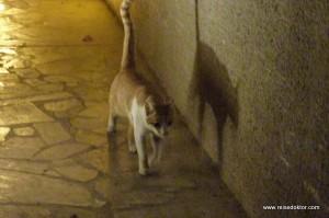 Katze Dubai