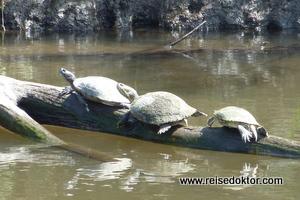 Schildkröten Kuba