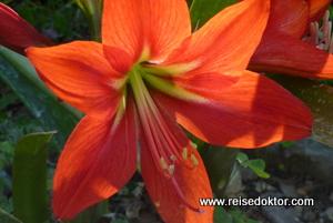 Soroa Orchideengarten