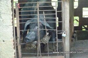 Tiere auf Kuba