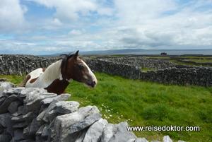 Pferd auf Inisheer, Irland