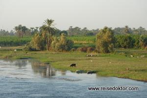 Flusslandschaft am Nil