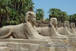 Sphingen in Luxor