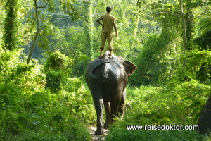 Elefanten im Chitwan Nationalpark