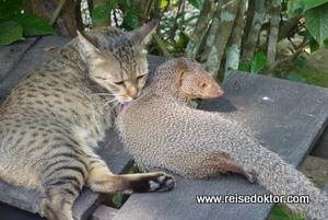 Mungo und Katze in der Chitwan Jungle Lodge