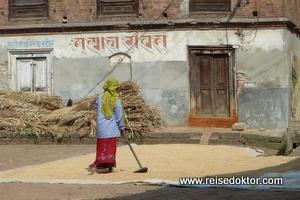 Reis trocknen in Nepal