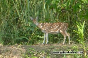 Tiere im Chitwan Nationalpark