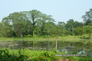 Wasserstelle im Chitwan Nationalpark
