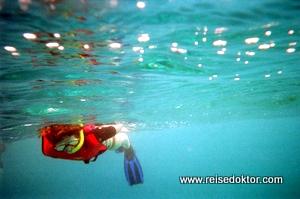 Schnorcheln und Tauchen auf Bonaire