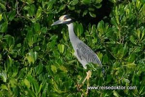 Vogelparadies La Restinga, Isla Margarita