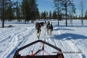 Finnland: Hundeschlitten Husky