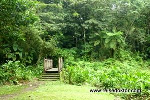 Grand Etang - Wanderung auf Guadeloupe