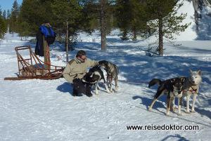 Husky Hundeschlitten Reisen
