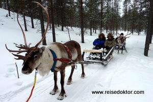 Rentierschlitten in Finnland
