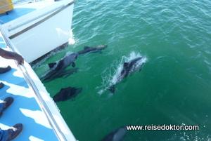 Delfine Lüderitz