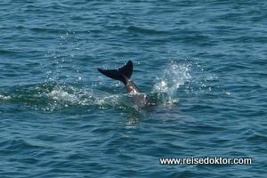 Delfine Namibia