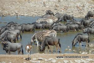 Etoscha Nationalpark Wasserloch