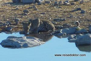 Leopard am Wasserloch
