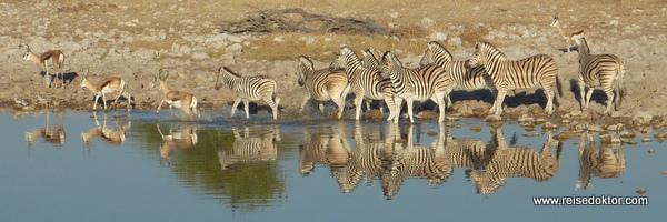 Okaukuejo Wasserloch in Namibia
