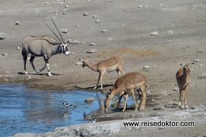 Tiere im Etoscha Nationalpark