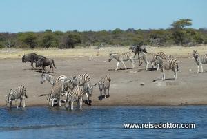 Wasserloch Etoscha Nationalpark