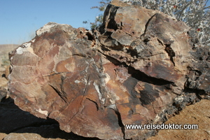 Versteinertes Holz im Petrified Forest National Monument