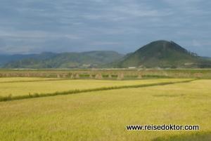 Nordkorea Reisfelder