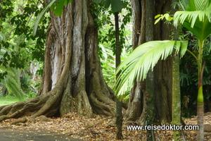 Botanischer Garten Pamplemousses