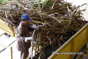 Rumproduktion auf Mauritius
