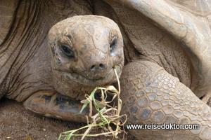 Schildkröten auf Mauritius