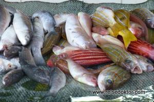 Fische Mutrah