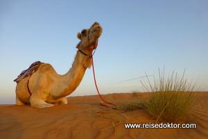 Kamelreisen Oman