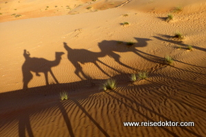 Kamelritt, Oman