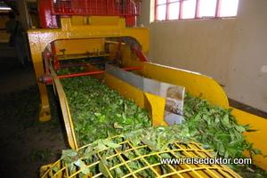 Teefabrik Boi Cheri
