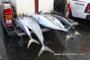 Thunfisch Verkauf, Oman