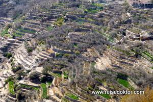 Terrassenfelder Jebel Akhdar