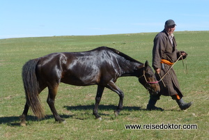 Rennpferd Mongolei