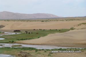 Sanddüne in der Mongolei