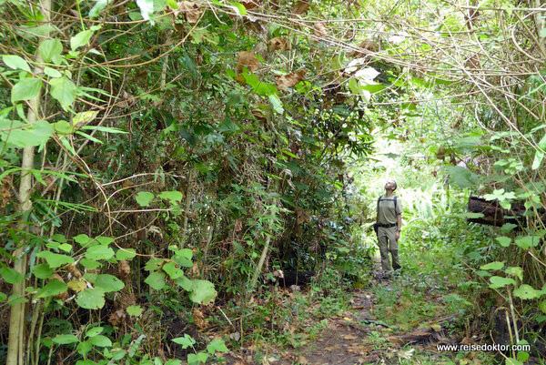 Dschungelwanderung Togian Island