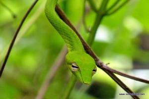 Durch den Dschungel auf Togian Island