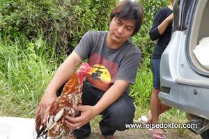 Hahn auf Sulawesi