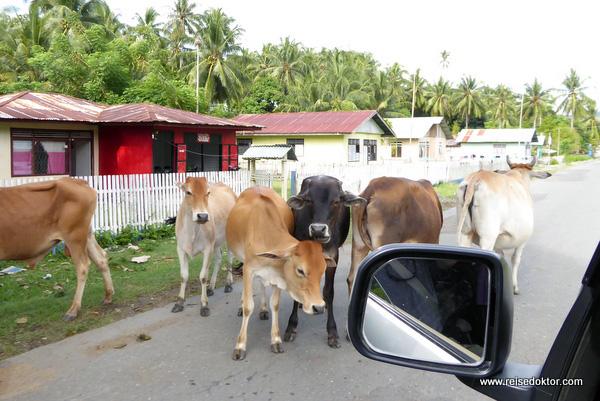 Straßenverkehr auf Sulawesi