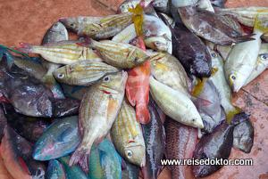 Sulawesi Fischmarkt