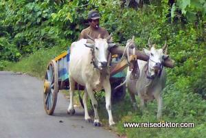 Fahrt durch die Minahasa Region
