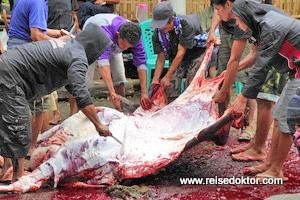 Begräbnis in Tana Toraja - Büffelschlachtungen - Tag 2