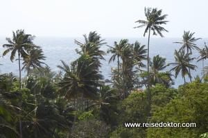 Palmen Kapverde