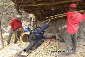 Grogue-Produktion (Rum) auf Santo Antao